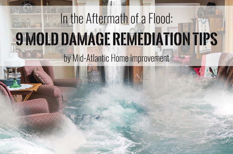 In the Aftermath of a Flood: 9 Mold Damage Remediation Tips